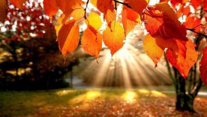 L'alimentation de l'automne en médecine chinoise