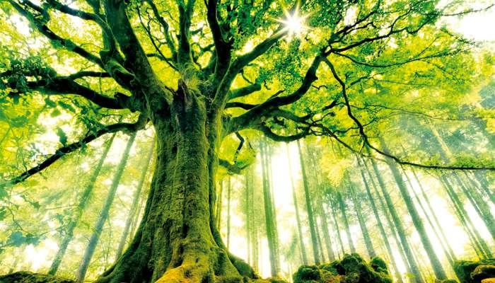 Les arbres, miroirs de notre humanité