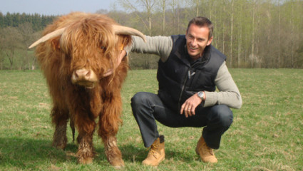 Le bœuf des prairies gaumaises