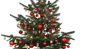 Choisir son sapin de Noël