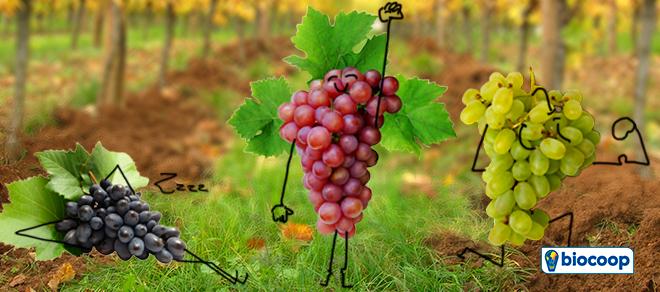 Foire aux vins, notre sélection Biocoop