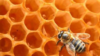 Produits de la ruche : comment choisir son miel ?