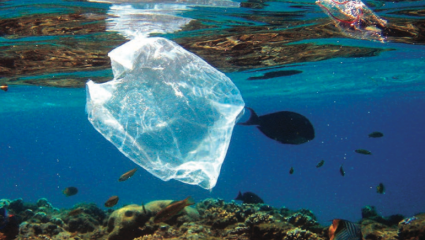 Mer de plastique : des dangers bien vivants