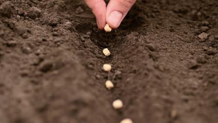 Un festival à la gloire des semences libres