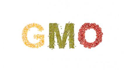 Les OGM  « sans danger » : une conclusion abusive !