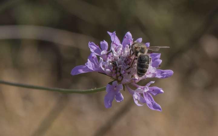Néonicotinoïdes : les abeilles attendront encore