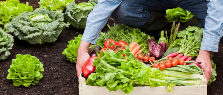 Agriculture bio, l'Europe demande son avis au citoyen