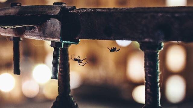Punaises De Lit Puces Et Araignees Comment Leur Dire Bye Bye