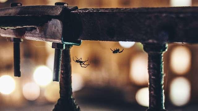 Punaises de lit, puces et araignées : comment leur dire bye-bye