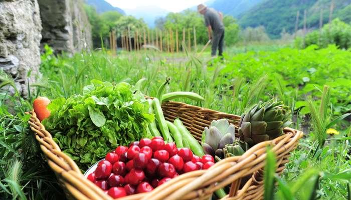 Manger bio ou local?
