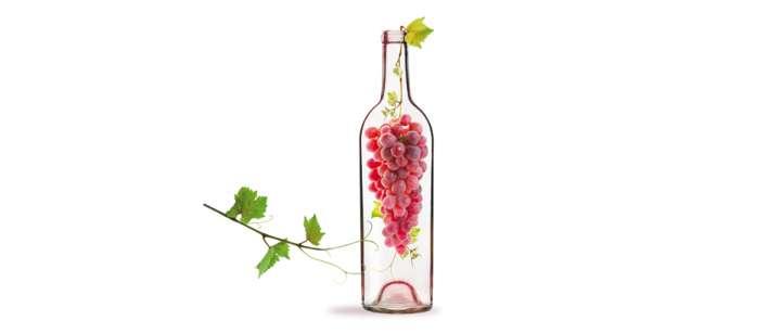 Le vin bio en mode majeur