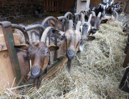 Concours Fermes d'avenir : un coup de projecteur sur les fermes de demain