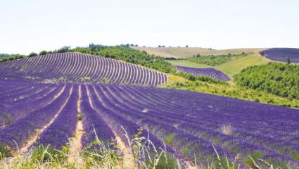 Florame au pays de la lavande
