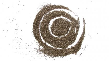Graine de chia,  le véritable trésor des Aztèques