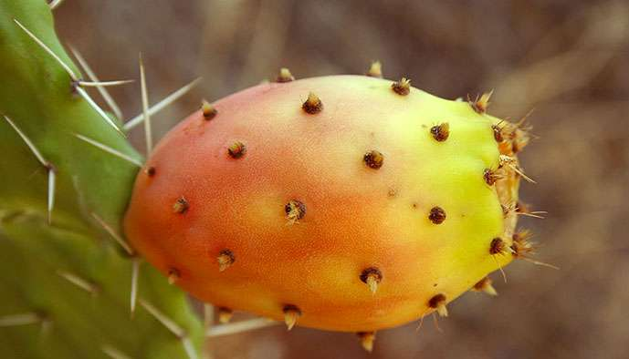 De quoi embrasser les cactus