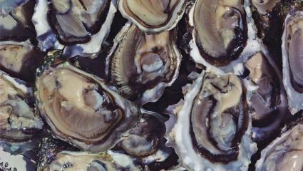 Huîtres d'été: gare aux triploïdes!