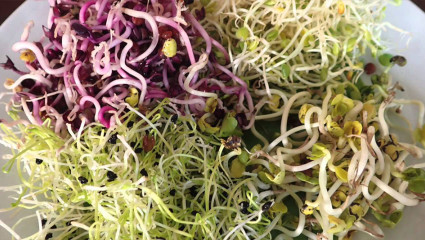 Les graines germées, un condensé de qualités nutritives