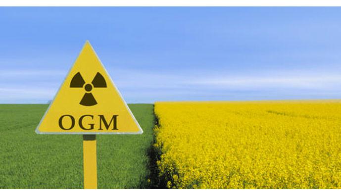 OGM : la législation européenne fait illusion