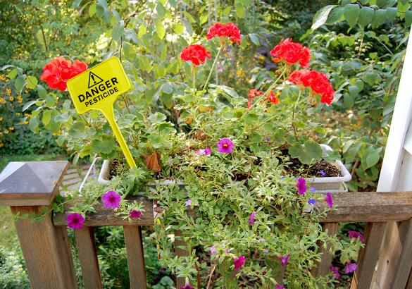 Pesticides amateurs