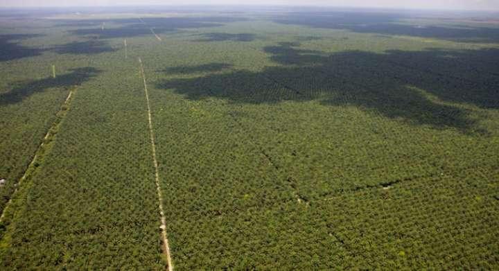 Huile de palme : dégâts écologiques sous label bio