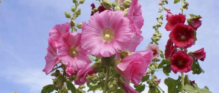 Plus de saveur avec les fleurs