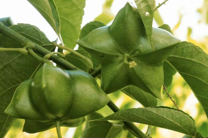 Sacha Inchi, périlla, nigelle : des huiles à consommer?