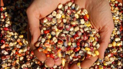 Vive les semences libres!