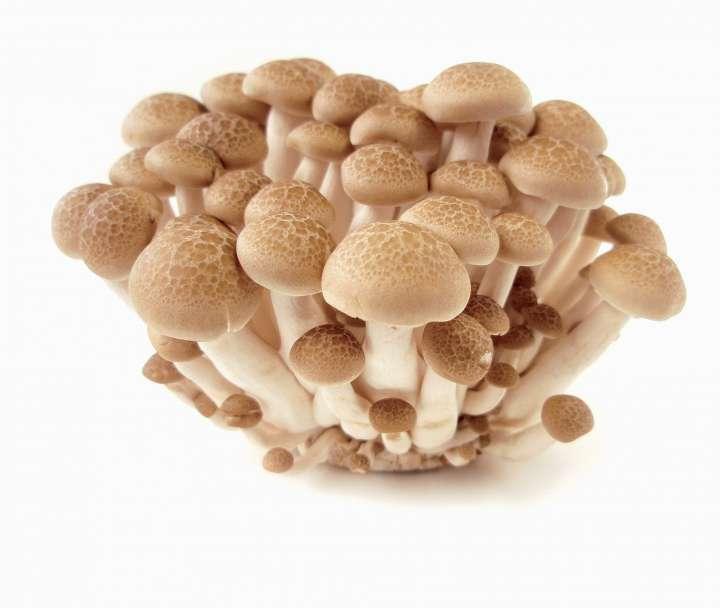 Stars de la mycologie : 7 champignons qui soignent