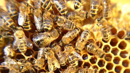 Du yoga au diapason des abeilles